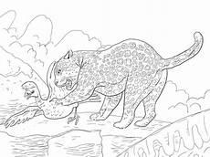 ausmalbild ein jaguar f 228 ngt einen vogel ausmalbilder