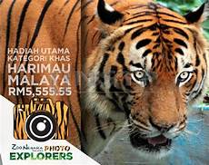 Hadiah Foto Harimau Rm5 555 55 Wilayah Berita Harian