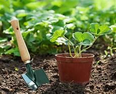 Gartentipps Im Juli Nutzgarten Gartenzauber