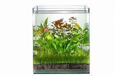 Welche Pflanze Produziert Am Meisten Sauerstoff - co2 d 252 ngung dennerle