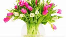 tipps tulpen im garten richtig pflanzen und pflegen