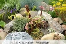 Pflanzen Günstig - steingarten bauen und gestalten anleitung und welche