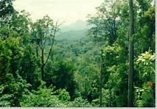 Tinggal Klick Semua Ada Di Sini Hutan Lindung