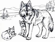 Malvorlagen Wolf Ausdrucken Free Printable Wolf Coloring Pages For