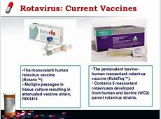 coronavirus in calves symptoms