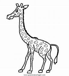 giraffen 06 gratis malvorlage in giraffen tiere ausmalen
