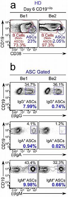 figures and data in ifnγ induces epigenetic programming of human t bethi b cells and promotes
