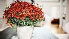 Pflanzen Die Die Luft Reinigen Luftreinigende Pflanzen Diese 10 Filtern Schadstoffe Am