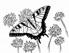Schmetterling Malvorlage Gratis Free Coloring Pages And Reference Pictures Starts