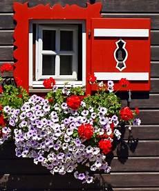 fioriere per davanzale finestra pin di mette loftager su salzburgerland austria