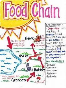plants as producers worksheets 13617 5th grade food chain science anchor charts teaching science 7th grade science