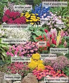 la collection de 12 plantes vivaces fleurs vivaces