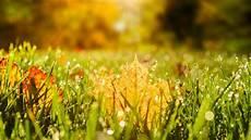 Rasenpflege Im Herbst - rasenpflege im herbst muss das sein brigitte de