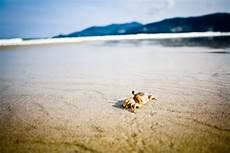 Gambar Pantai Laut Alam Pasir Batu Lautan Horison