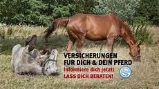 Op Versicherung Pferd - versicherungen rund ums pferd pferde world