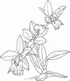 Window Color Malvorlagen Orchideen Orchideengewaechs Nett Ausmalbild Malvorlage Blumen