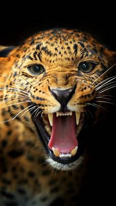 cheetah wallpaper for iphone leopard mobile wallpapers