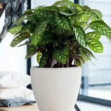 Pflanzen Wenig Licht - 7 pflegeleichte zimmerpflanzen die wenig licht brauchen