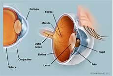 Anatomi Mata Manusia Dan Fungsi Dari Setiap Bagiannya