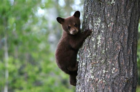 Deep Fried Bears