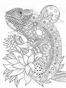 chameleonb erwachsenen coloring seite stock vektor und