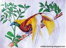 Contoh Gambar Mewarnai Burung Dengan Pensil Warna Kataucap