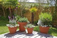 plante terrasse plein soleil plantes en pot sp 233 cial s 233 cheresse gamm vert
