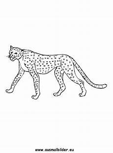 Ausmalbilder Leopard Ausdrucken Ausmalbilder Leopard Leoparden Malvorlagen
