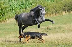 Malvorlage Pferd Und Hund Muster Formloser Kaufvertrag Hund