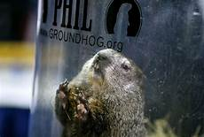 groundhog day 2019 what you need to know about punxsutawney phil and his predictions silive com