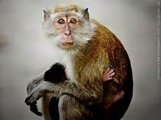 Gambar Monyet Animasi Korea Meme Lucu Bergerak