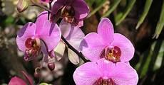 wie pflegt orchideen orchideen pflegen und vermehren mein sch 246 ner garten