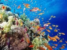 Foto Foto Keindahan Alam Bawah Laut