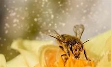 Hausmittel Gegen Zigarettengeruch - pollenallergie hausmittel 20 tipps gegen heuschnupfen