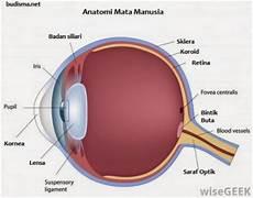 Apakah Fungsi Lensa Mata Kliksma