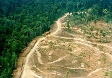 Hendri Christian Nov Ancaman Kerusakan Hutan Kalimantan