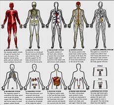 Sistem Limfatik Manusia