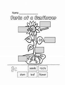plants worksheets for primary 13486 parts of a plant worksheet by erica foster teachers pay teachers