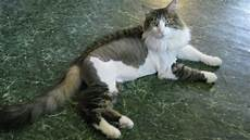 should i shave my cats catster