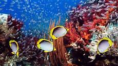 Gambar Pemandangan Bawah Laut Indonesia