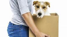 comment trouver un logement o 249 les chiens sont accept 233 s