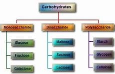Diagram For Food That Are Carbohydrate by Carbohydrates And Structure Thebiochemeffect