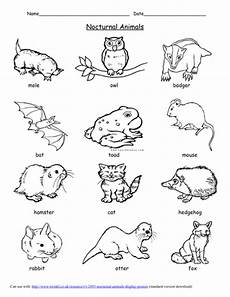 nocturnal animals worksheets 13983 nocturnal animals link to light and by uk teaching resources tes