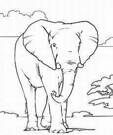 get this elephant coloring pages free printable