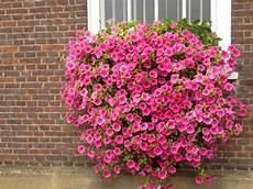 terrazzo fiorito tutto l anno petunie surfinie fiori per tutto l anno i nostri