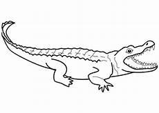 Malvorlage Kostenlos Krokodil Krokodil Malvorlagen Kostenlos Zum Ausdrucken