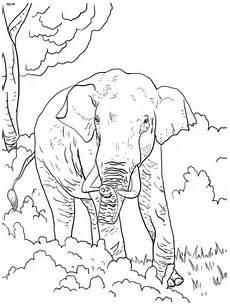 Ausmalbilder Indischer Elefant Ausmalbild Indischer Elefant Ausmalbilder Kostenlos Zum