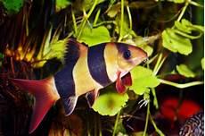 Gambar Ikan Warna Kuning Gambar Ikan Hd