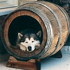 holzfass selber bauen hundebett designs was finden hunde gem 252 tlich hunde