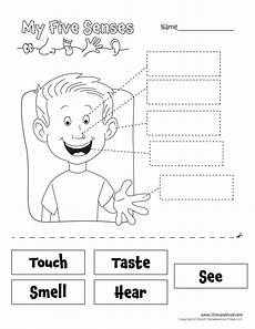 five senses worksheet tim de vall